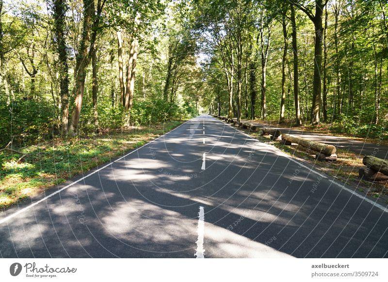 leere zweispurige Landstraße durch Wald Straße kein verkehr Verkehr reisen Eilenriede Hannover Waldgebiet Hintergrund Natur Fahrspur Landschaft Weg Asphalt