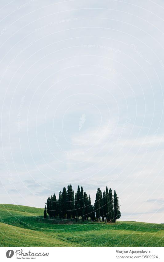 Blick auf die schönen Zypressen in der Toskana, Italien Ackerbau Hintergrund Schönheit Cloud Wolken Land Landschaft Umwelt Europa Bauernhof Ackerland Feld Gras