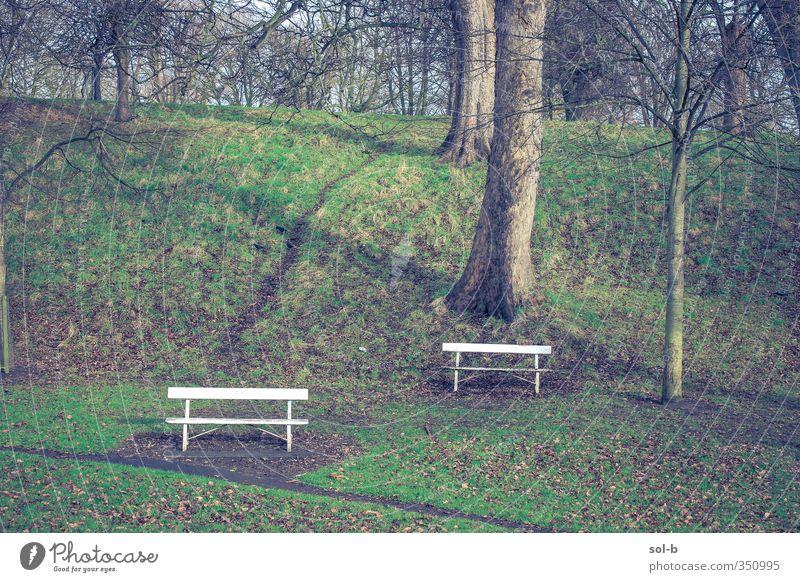 zwei Bänke Natur Winter Baum Gras Park Dublin Republik Irland Wege & Pfade einzigartig natürlich braun grün Traurigkeit Trauer Einsamkeit Bank Blatt Hügel