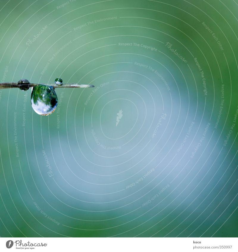 Wassertropfen Himmel Natur blau grün weiß Sommer Pflanze kalt Gras Frühling Gesundheit glänzend authentisch Schönes Wetter frisch