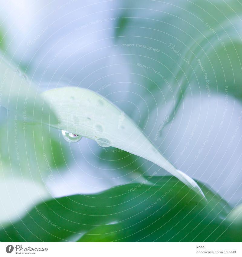 Wassertropfen. schon wieder. elegant schön Wellness Leben harmonisch Wohlgefühl Umwelt Natur Pflanze Sonnenlicht Frühling Sommer Blume Blatt Blüte Grünpflanze