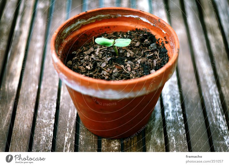 grow up Gesundheit Wohlgefühl Garten Umwelt Natur Pflanze Erde Frühling Blatt Grünpflanze Sonnenblume Holz Backstein beobachten Blühend Wachstum frisch