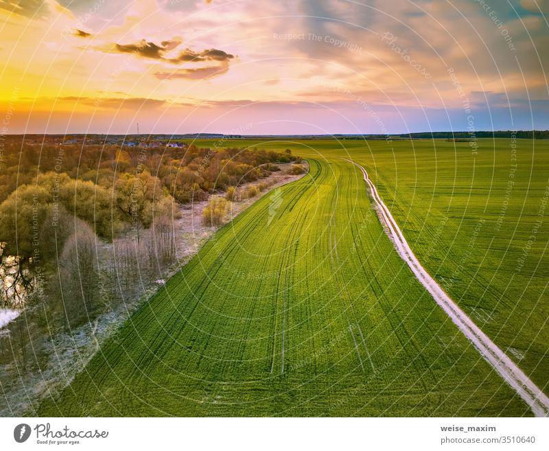 Ländlicher Feldweg durch frühlingsgrüne Felder. Ländliche Abendszene Ackerbau ländlich Pflanze Straße Weizen Frühling Schmutz Baum Fluss Antenne Dröhnen Wald