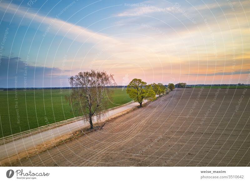 Ländlicher Feldweg mit Bäumen. Wunderschöner Sonnenuntergang auf dem Land Straße Ahorn ländlich Pflanze Weizen Frühling Schmutz Baum Allee Antenne Dröhnen Wald