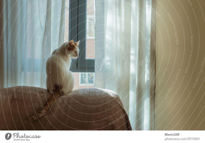 Weiße Katze mit Flecken vor dem Fenster lieblich bezaubernd Schmusekatze Haustier heimisch kuschlig Sofa heimwärts liebevoll grimmig weiß warm Tier züchten