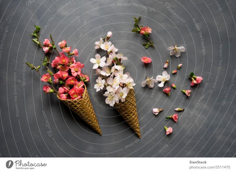 Blumen in Eistüte auf Zement-Hintergrund Kornett Waffel flach legen Top Ansicht rosa Blumenstrauß Natur geblümt Zapfen Frühling Geschenk Liebe romantisch