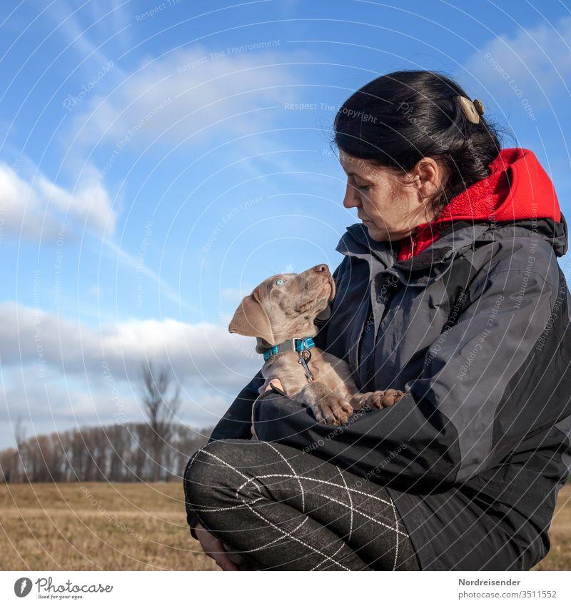 Tierliebe Welpe Frau Tierporträt Tag Außenaufnahme Farbfoto Puppy Weimaraner Geborgenheit Schutz Vertrauen Blick Freundlichkeit schön Zufriedenheit beobachten