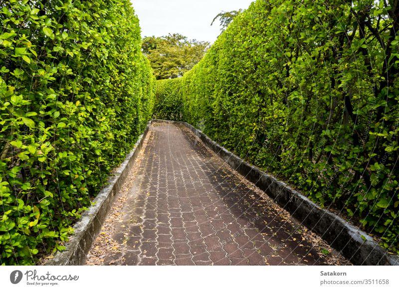 Ziegelsteinweg zwischen hohen Baummauern Laufsteg natürlich Garten Natur Park Baustein Landschaft Weg im Freien Gartenarbeit Pflanze Hintergrund Wand