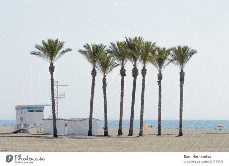 Oase einer großen Palmengruppe am Strand von Roquetas de Mar. Handflächen mar August Juli Sommer Almeria Spanien reisen Tourismus Feiertage Sol exotisch costa