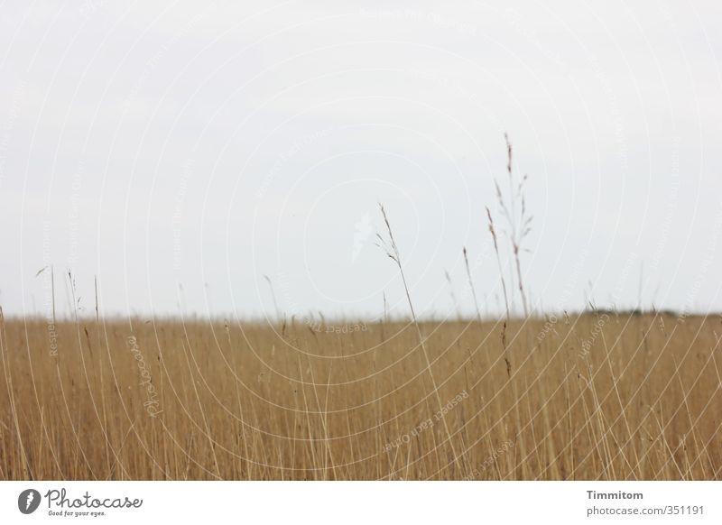 Wenig(e) und viel(e). Ferien & Urlaub & Reisen Umwelt Natur Landschaft Pflanze Himmel Gewitterwolken Wetter Nordsee Dänemark einfach natürlich braun grau ruhig