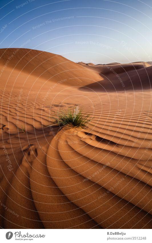 Eine Pflanze kämpft sich durch den Wüstensand. Oman Reisen Panorama (Aussicht) Tag Menschenleer Außenaufnahme Farbfoto Blauer Himmel Einsamkeit gelb braun blau