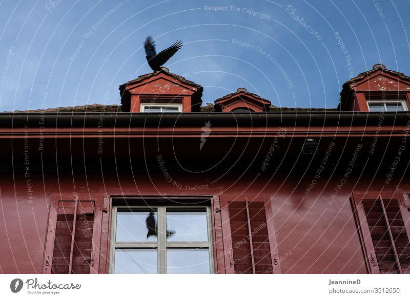 Vogel auf Dach Wand Coolness Außenaufnahme Fassade Fenster Gebäude Farbfoto Architektur kahl minimalistisch klar Menschenleer Haus rot Farbe Fensterbrett