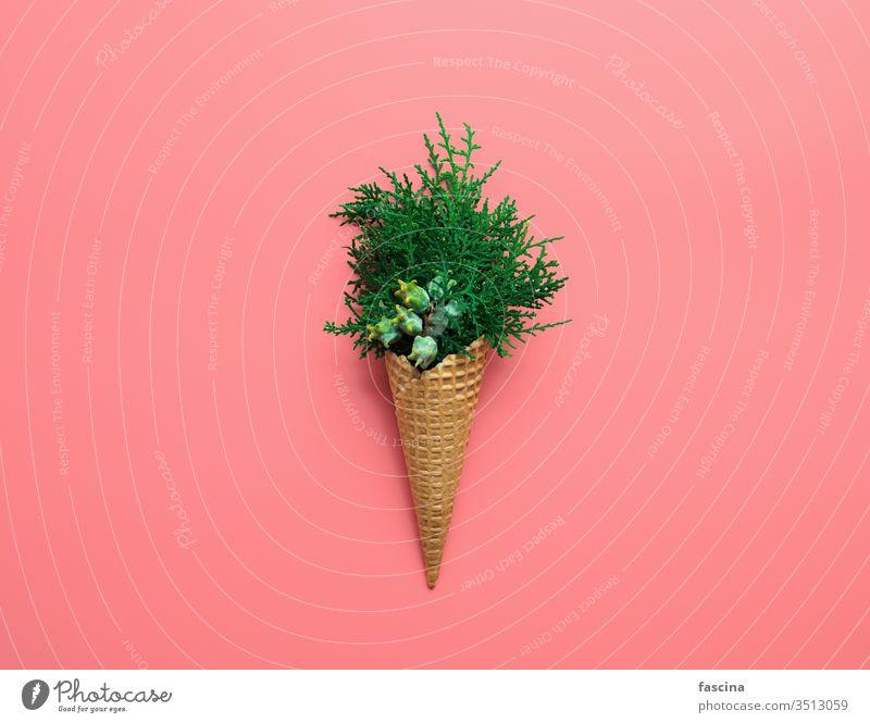 Blumenstrauss aus Zypressenzweigen in Eistüten Weihnachten Winter Konzept Sahne Dezember Baum Hipster kreativ Hintergrund sehr wenige Lebensmittel Sommer Zapfen