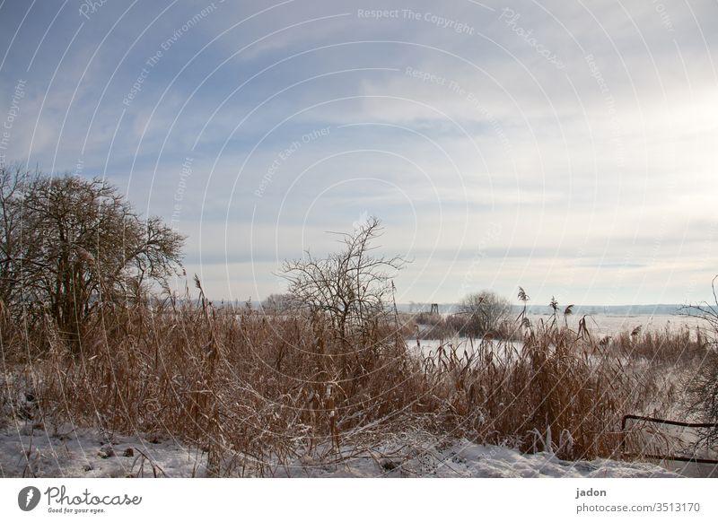 adventsgruß. Weiher Winter Wasser Teich Frost Schnee Eis Außenaufnahme Menschenleer gefroren Gedeckte Farben Textfreiraum oben kalt Umwelt weiß blau Wetter