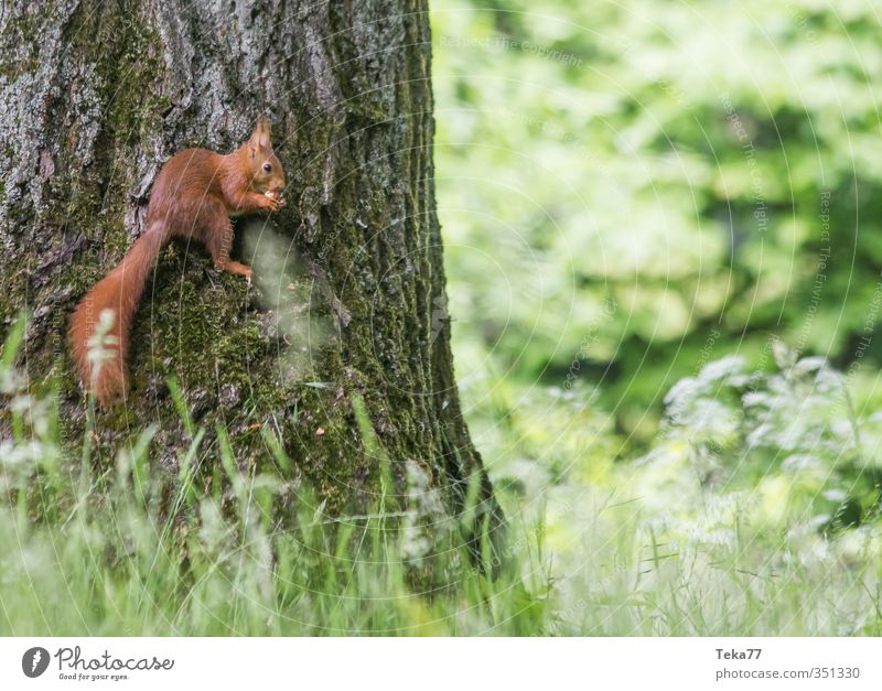 Hochsitz Natur Pflanze Baum Landschaft Tier Umwelt Gras Wildtier Zufriedenheit Abenteuer Fell Pfote stagnierend Eichhörnchen Krallen