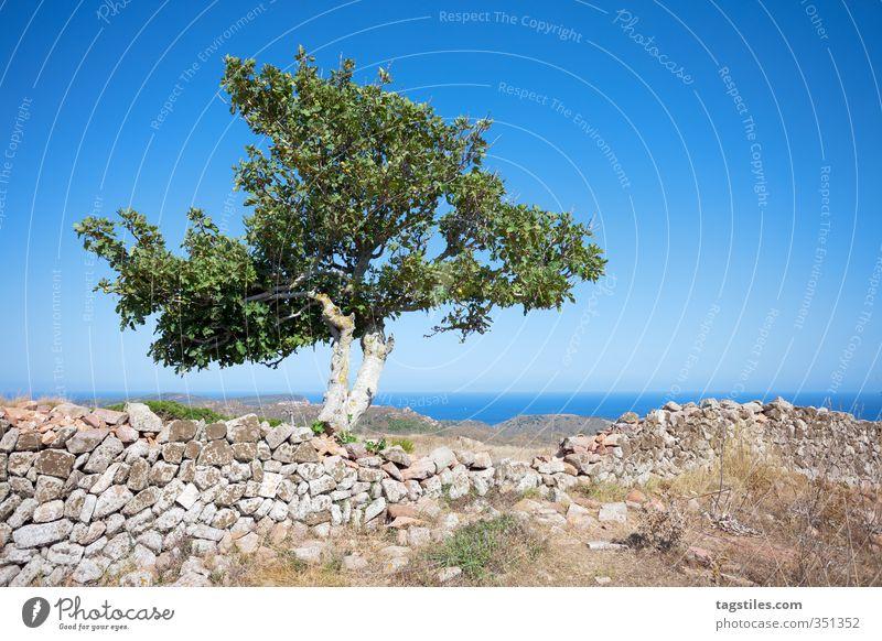 BÄUMSCHE Natur Ferien & Urlaub & Reisen alt Pflanze Baum Landschaft Erholung ruhig Architektur Mauer Reisefotografie Stein Idylle Tourismus Postkarte Paradies