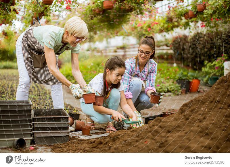 Ältere Frau, junge Frau und kleines Mädchen pflanzen Blumen in Töpfen im Gemüsegarten Aktivität Botanik Kaukasier kultivieren kultivierend niedlich Umwelt