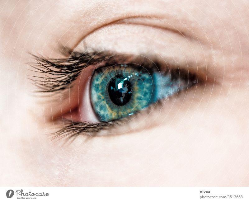 Jungenauge Auge Blick Gesicht Kind Mensch Haare & Frisuren Farbfoto Wimpern blau grün Nahaufnahme Detailaufnahme Makro Haut Augen geöffnet 1 Licht Tag Kindheit