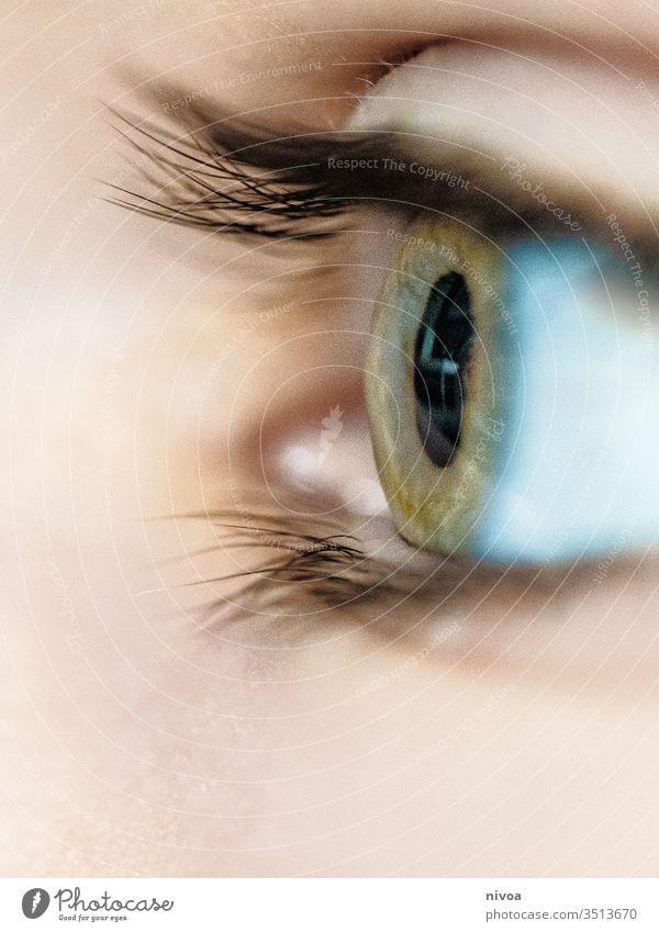 Jungenauge Kindheit Auge Wimpern grün blau Farbfoto Blick Haut Detailaufnahme Makro sensibel empfindliche Haut wachsam Wegsehen Gesicht Mensch 1 Kopf