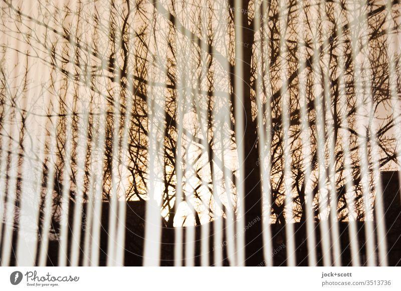 Die Gedanken wandern auf und ab, reflektieren am Ende des Tages und hängen an knorrigen Ästen. Reflexion & Spiegelung Linie Himmel Surrealismus Sonnenuntergang