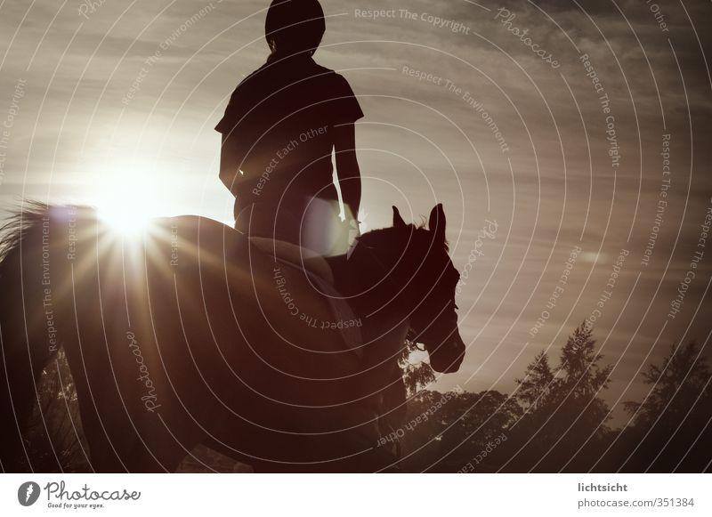 Lucy Luke Mensch Himmel Natur Sonne Baum Landschaft Wolken schwarz feminin Horizont Freizeit & Hobby Idylle Schönes Wetter Ausflug Pferd Abenddämmerung