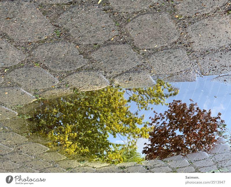 UpsideDown Pfütze Spiegelung Baum Natur gepflastert Pflastersteine Baumkrone Wasser Außenaufnahme Reflexion & Spiegelung nass Regen Straße Wetter Menschenleer