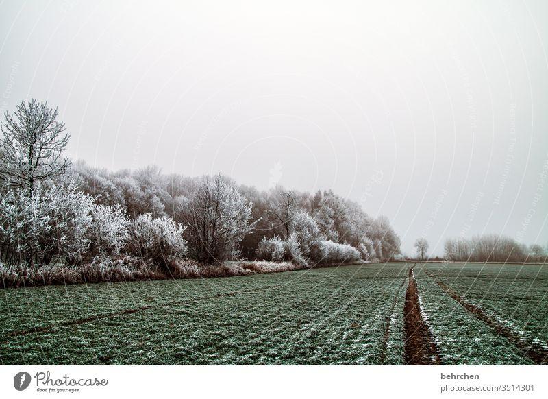 vorfreude | stille schneelandschaften idyllisch verträumt schön Schneelandschaft Winterspaziergang Wintertag Deutschland Märchenwald Märchenhaft geheimnisvoll