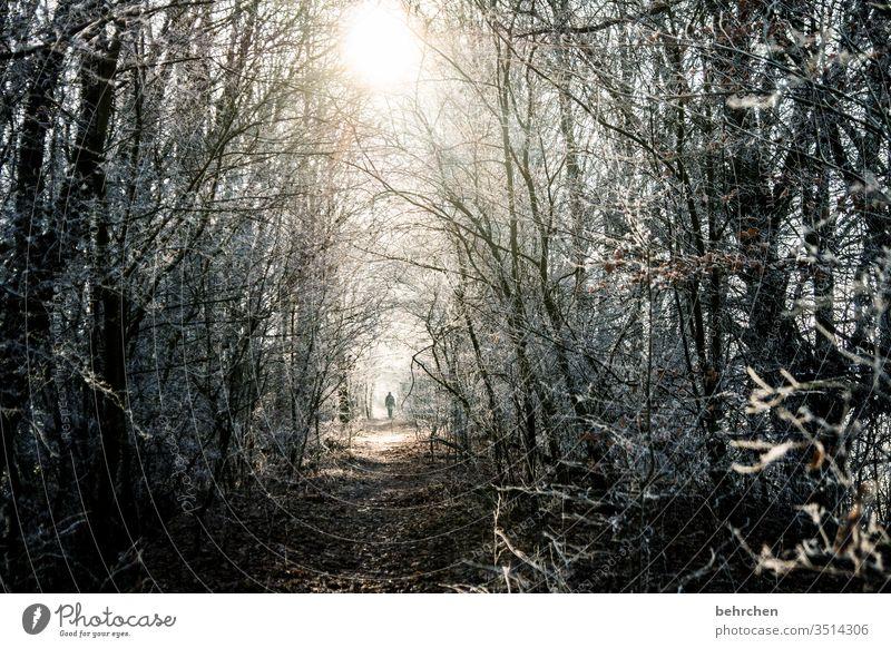 zwischenräume   zwischen dunkelheit ist licht Hoffnung Glaube Erleuchtung gruselig beängstigend Krimi hell Licht magisch mystisch Gegenlicht Sonnenlicht Winter