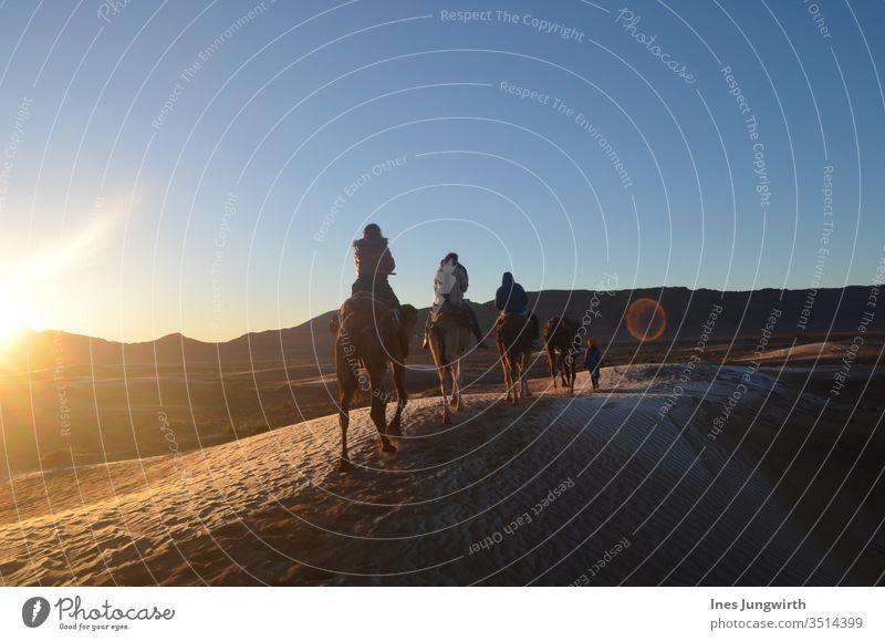 reitend durch die Saharawüste in Marokko Dromedar Kamel Sahara-Wüste Sand heiß Sonnenuntergang Sonnenstrahlen exotisch Lichtspiel Außenaufnahme Afrika Farbfoto