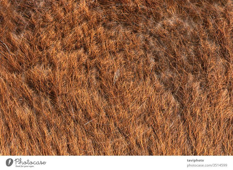 Lama-Fell detaillierte Textur Material Säugetier Schaf beige texturiert Nahaufnahme Oberfläche Hintergrund Tier Detailaufnahme Wolle Haut weich pelzig wollig