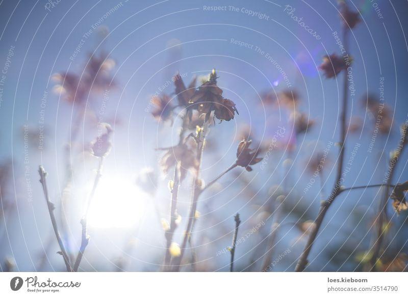 Verschwommene Buschzweige am blauen Himmel mit Sonnenhintergrund im Frühling Natur Ast Baum Hintergrund sonnig Bokeh Unschärfe Pflanze natürlich Park abstrakt