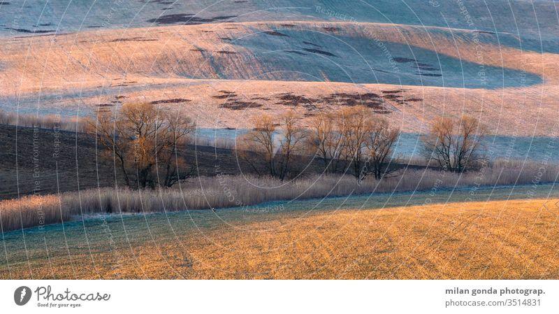 Bäume auf den Feldern der Region Turiec in der Nordslowakei. Slowakische Republik Landschaft ländlich Frühling Detailaufnahme Natur Morgen Baum
