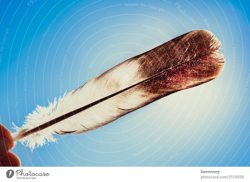 Feder im Gegenlicht feather Sonnenlicht blau Himmel hell Licht Farbe filigran Leichtigkeit fliegen Freiheit auf und davon Indianer träumen