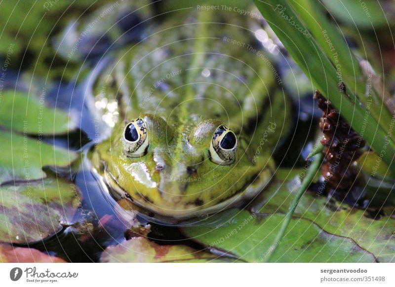 Wildlife Natur grün Wasser Sommer Pflanze ruhig Tier Blatt Umwelt Leben Schwimmen & Baden springen Garten wild glänzend Wildtier