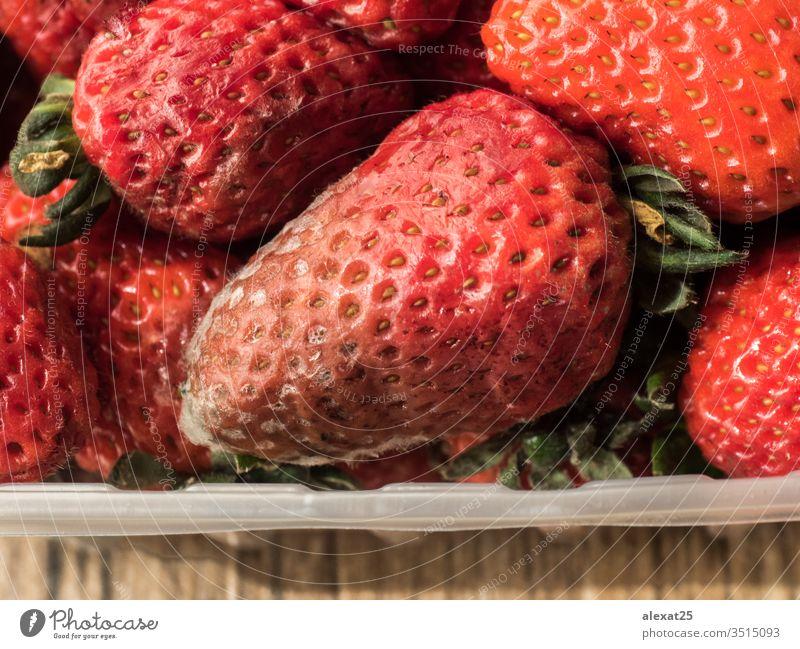 Faule Erdbeeren in Plastikbehälter Bakterien schlecht Beeren biologisch Nahaufnahme Verwesung Lebensmittel Frucht pilzartig Pilze Müll Makro Schimmelpilz