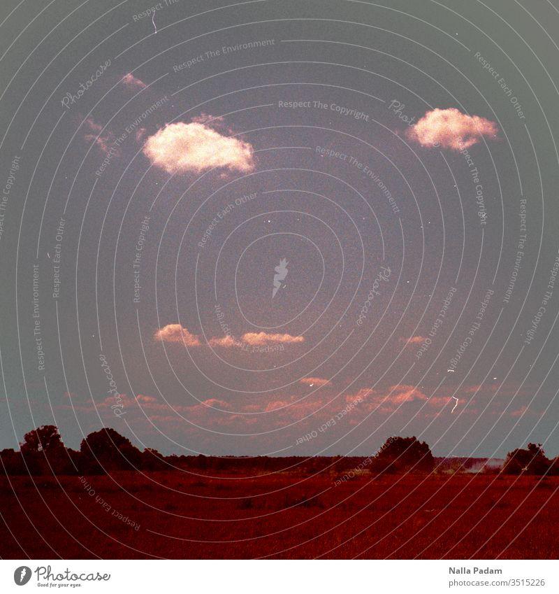 Wolkenpaar vs. Baumpaare Bäume Weite Brandenburg Feld Himmel weiß grün blau Analogfotografie Landschaft Menschenleer Horizont Natur Außenaufnahme Schönes Wetter