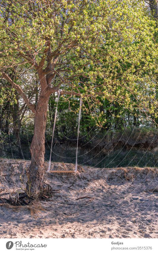 leere Schaukel hängend an einem Baum am Strand Schaukeln Spielen Natur Landschaft Strand und Meer Strandleben grün Pflanze Holz Leben Spaß haben Hoffnung