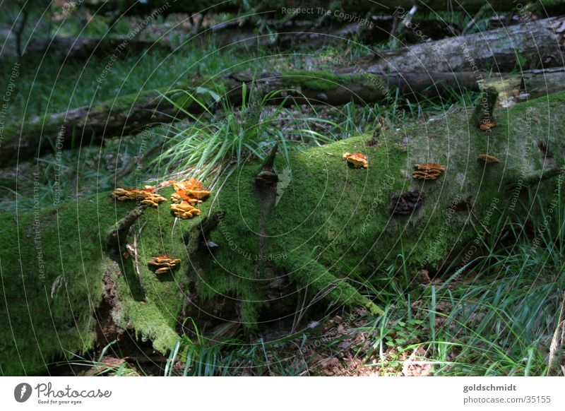 Bannwald Baum grün Blatt Wald kaputt Pilz Sonnenstrahlen