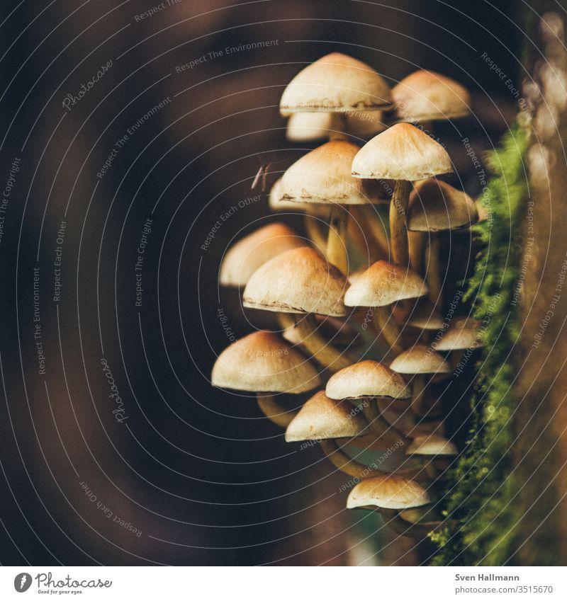 Pilze an einem Baumstamm Zentralperspektive Schwache Tiefenschärfe Dämmerung Makroaufnahme Detailaufnahme Nahaufnahme Außenaufnahme mehrfarbig Gedeckte Farben