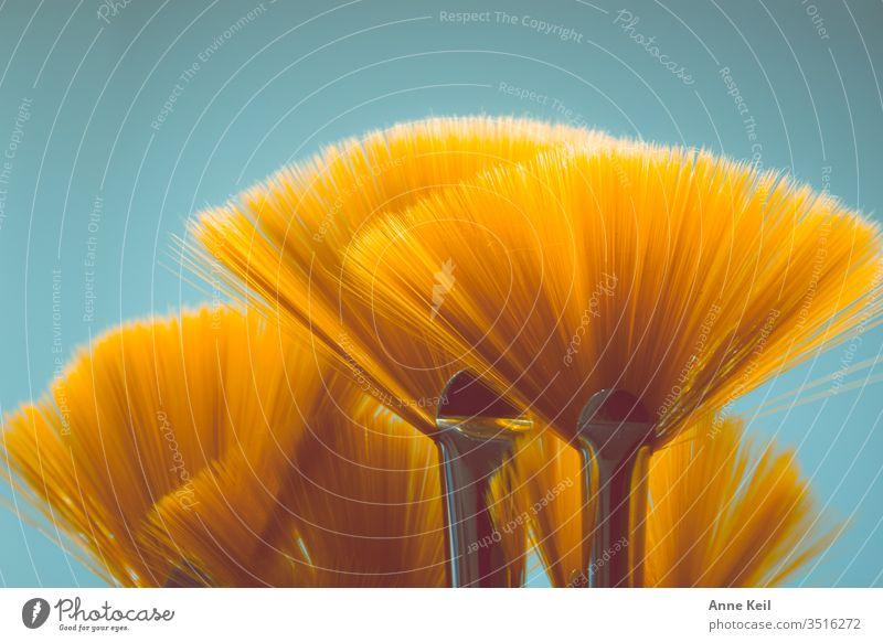 Orange leuchtende Fächerpinsel wie ein Blumenstrauss  mit Kontrast im Hintergrund Leuchten licht