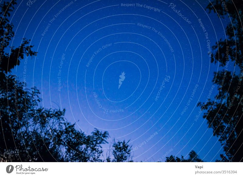 Nachtdunkelblauer Himmel im Wald Stern Bäume Raum Weg milchig Hintergrund Galaxie sternenklar Astronomie Weltall Nebel Sternbild Natur Schmuckkörbchen