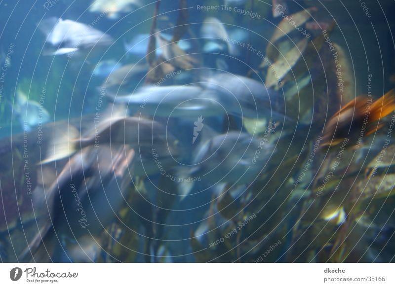 Fische blau Wasser Meer Bewegung Stimmung Aquarium