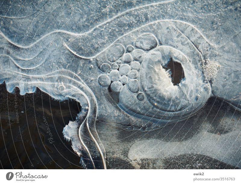 Froststarre Winter Eis bizarr Gebilde Strukturen & Formen Eisblasen rund viel Linien gefroren vereist erstarrt kalt Außenaufnahme Farbfoto Menschenleer Natur
