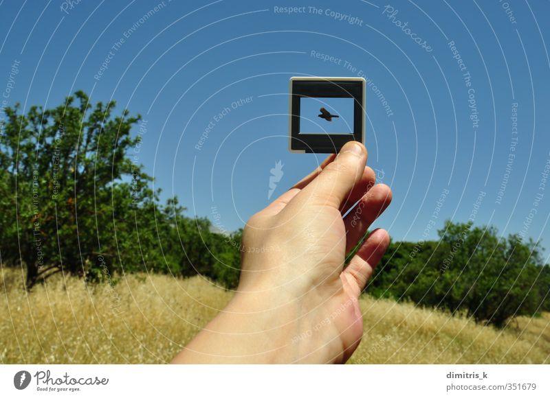 Himmel Natur blau Pflanze Hand Baum Landschaft Tier Umwelt Vogel fliegen Fotografie frei Finger Flügel Grafik u. Illustration