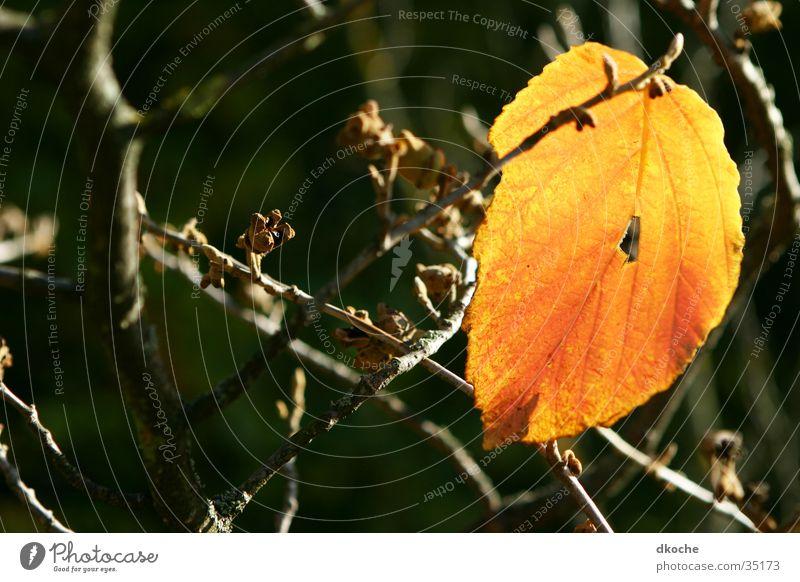 Herbstblatt Blatt gelb Jahreszeiten Baum gold
