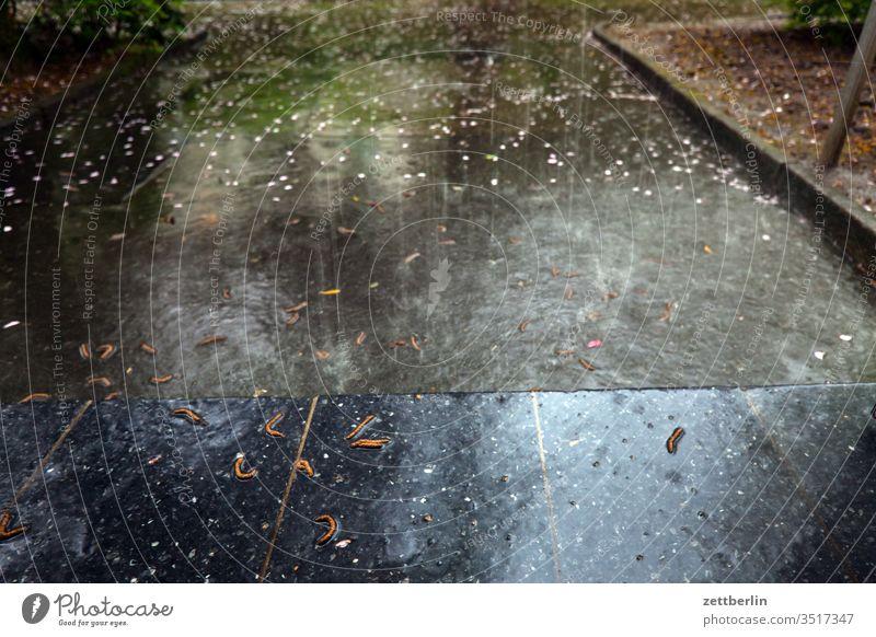 Regenschauer regen pfütze regenwasser bürgersteig menschenleer nass niederschlag nässe regentropfen sommerregen textfreiraum wolkenbruch regenschauer platzregen
