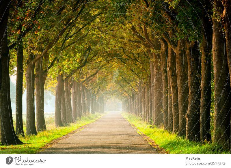 Baumallee im Frühherbst Alleebäume baum blätter herbstlandschaft herbstlaub herbstlich herbststimmung indian summer jahreszeit laubbaum lichtung malerisch