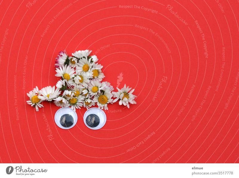 Hut aus Gänseblümchen gelegt mit zwei Kulleraugen auf rotem Grund Auge weiß Spielerei Maßliebchen Bellis Deko Blume Blühend Blütenblatt Nahaufnahme Blog