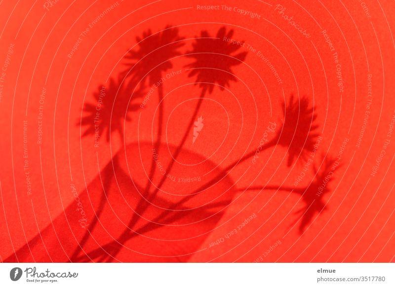 Schatten von fünf Gänseblümchen in einem Glas auf rotem Untergrund Blume Schattenspiel Vase Blumenstrauß Blüte Dekoration & Verzierung schön Frühlingsgefühle