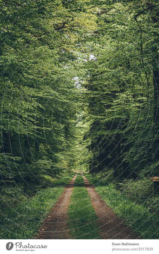 Einsamer Wald Weg im Frühling Natur Baum Pflanze Umwelt Park Außenaufnahme wild Holz Licht grün Landschaft Farbfoto viele Sonnenlicht Abenteuer wandern Blatt